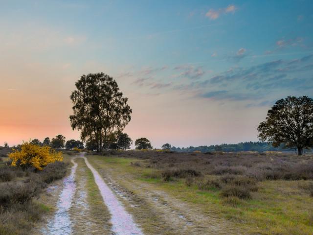 Verblijf in een boshotel nabij de <b>Utrechtse Heuvelrug</b> incl. 3-gangendiner