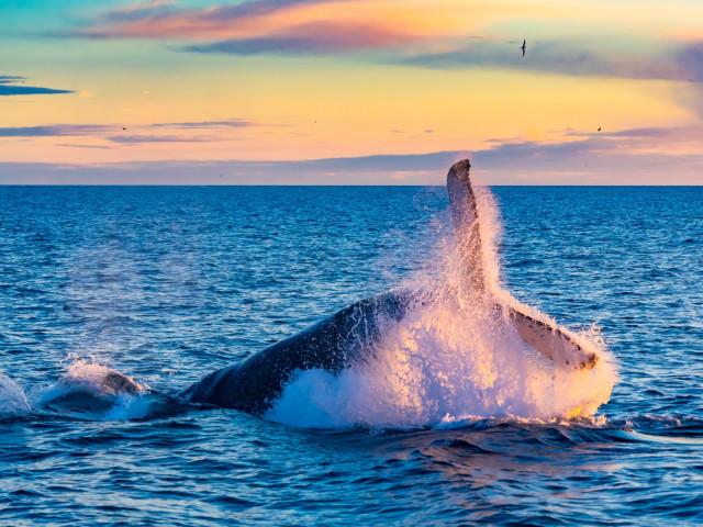 Winterreis <b>Noord-IJsland</b> incl. walvis spotten en Noorderlicht excursie